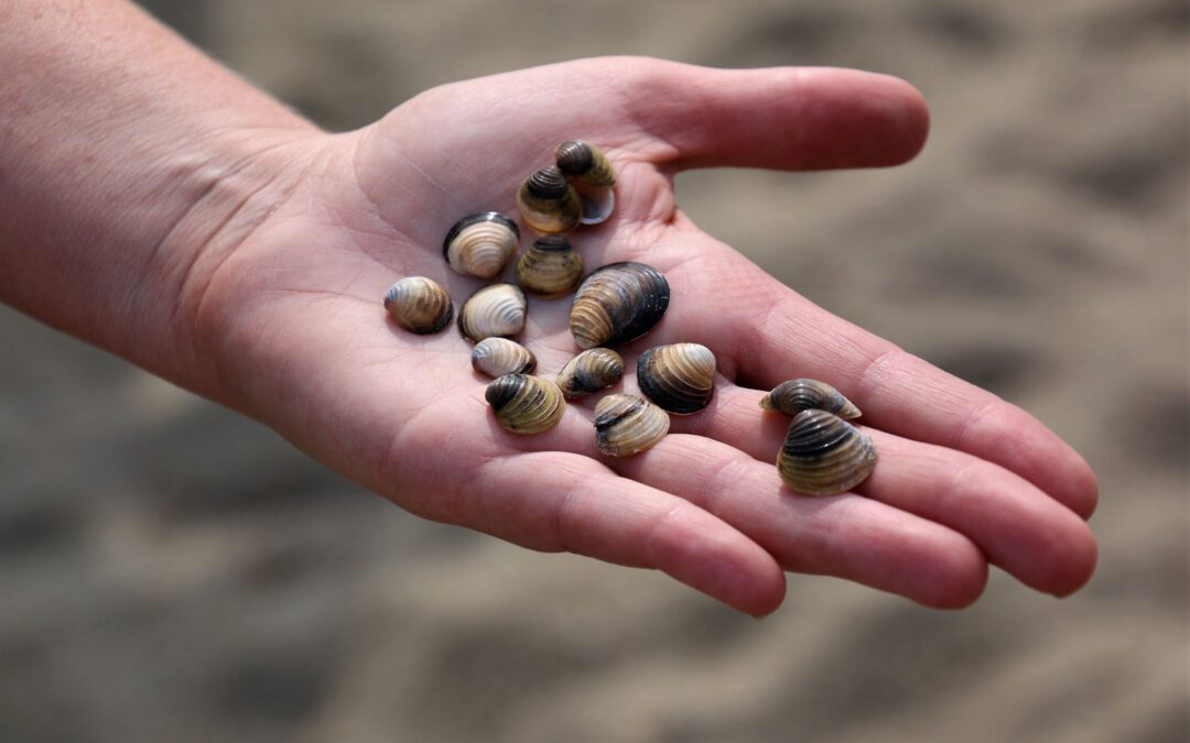OLWQS volunteers trained to find Invasive Clams